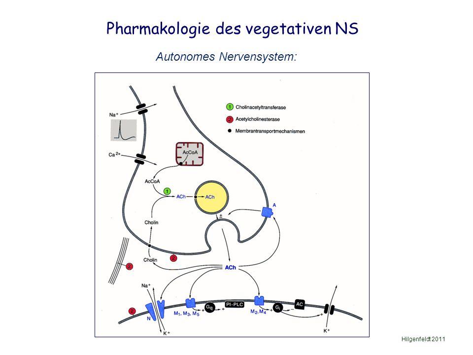 Pharmakologie des vegetativen NS Hilgenfeldt 2011 Autonomes Nervensystem: