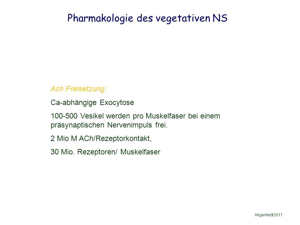 Pharmakologie des vegetativen NS Hilgenfeldt 2011 Ach Freisetzung: Ca-abhängige Exocytose 100-500 Vesikel werden pro Muskelfaser bei einem präsynaptischen Nervenimpuls frei.