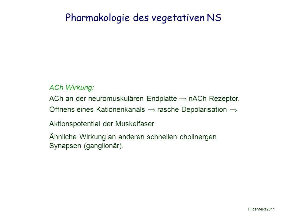 Pharmakologie des vegetativen NS Hilgenfeldt 2011 ACh Wirkung: ACh an der neuromuskulären Endplatte  nACh Rezeptor.