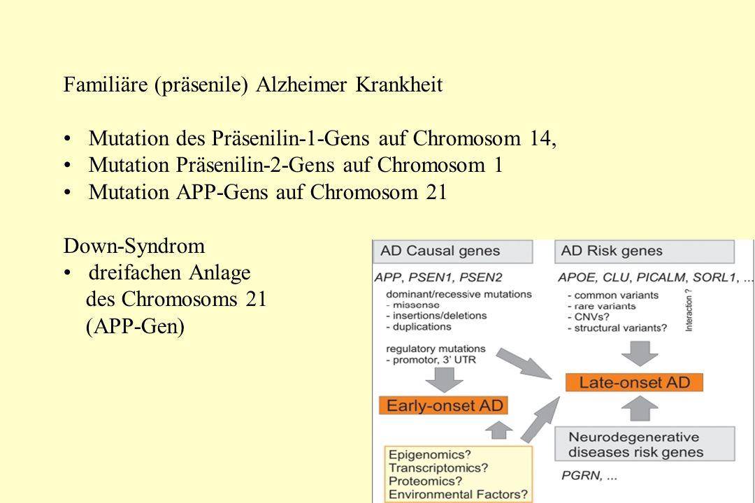 Familiäre (präsenile) Alzheimer Krankheit Mutation des Präsenilin-1-Gens auf Chromosom 14, Mutation Präsenilin-2-Gens auf Chromosom 1 Mutation APP-Gens auf Chromosom 21 Down-Syndrom dreifachen Anlage des Chromosoms 21 (APP-Gen)