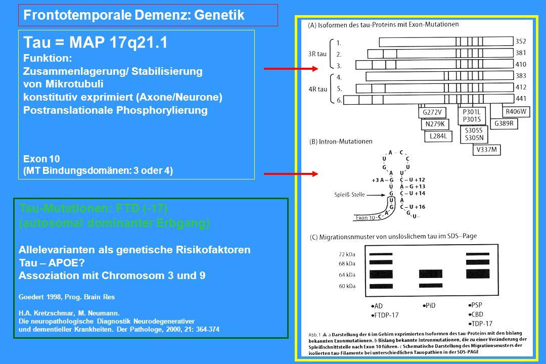Tau = MAP 17q21.1 Funktion: Zusammenlagerung/ Stabilisierung von Mikrotubuli konstitutiv exprimiert (Axone/Neurone) Postranslationale Phosphorylierung Exon 10 (MT Bindungsdomänen: 3 oder 4) Frontotemporale Demenz: Genetik Tau-Mutationen: FTD (-17) (autosomal dominanter Erbgang) Allelevarianten als genetische Risikofaktoren Tau – APOE.