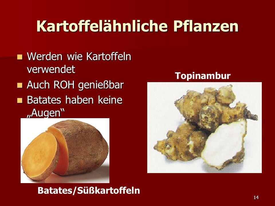 """14 Kartoffelähnliche Pflanzen Topinambur Werden wie Kartoffeln verwendet Werden wie Kartoffeln verwendet Auch ROH genießbar Auch ROH genießbar Batates haben keine """"Augen Batates haben keine """"Augen Batates/Süßkartoffeln"""