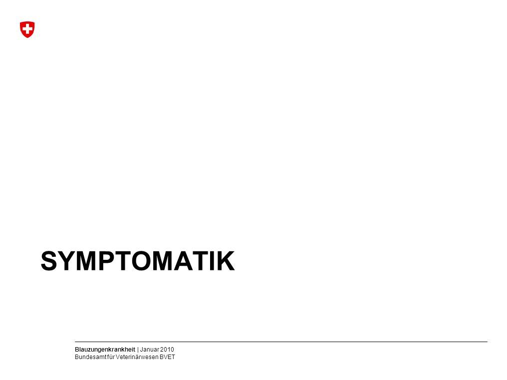 Blauzungenkrankheit | Januar 2010 Bundesamt für Veterinärwesen BVET SYMPTOMATIK