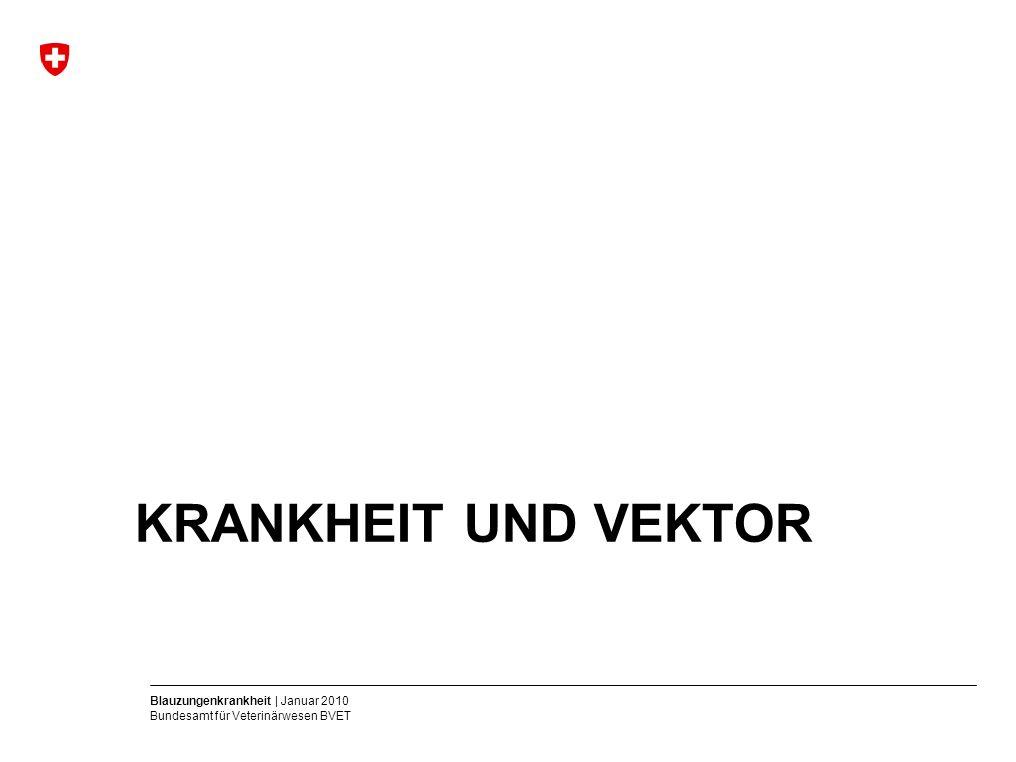Blauzungenkrankheit | Januar 2010 Bundesamt für Veterinärwesen BVET KRANKHEIT UND VEKTOR