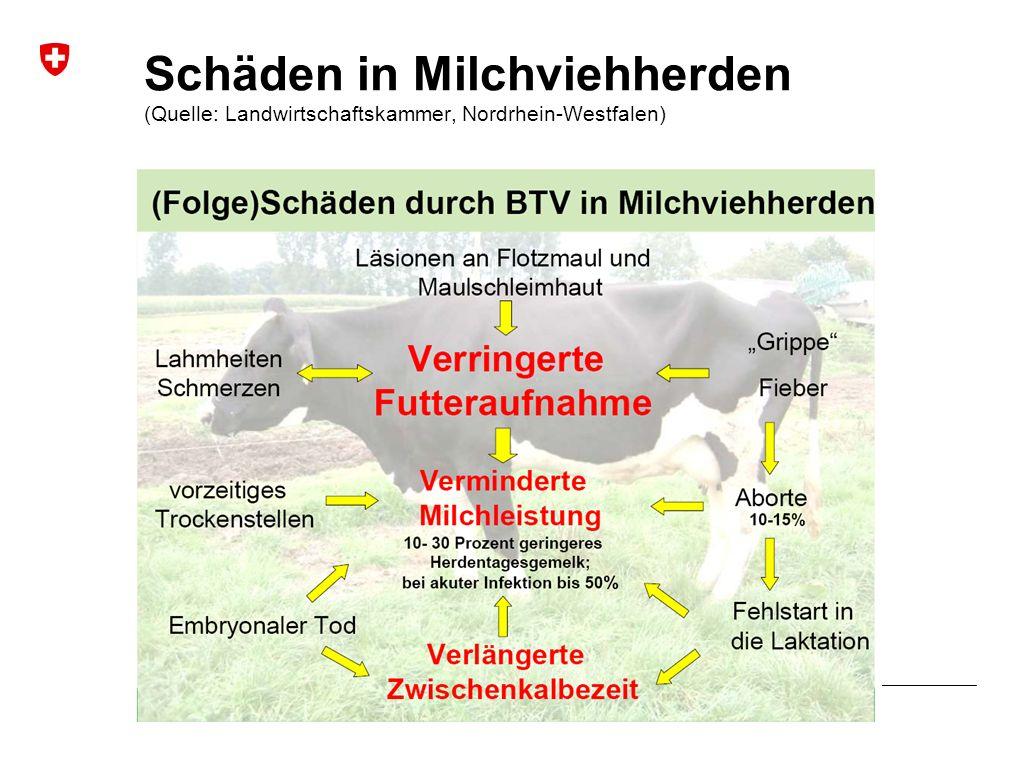 Blauzungenkrankheit | Januar 2010 Bundesamt für Veterinärwesen BVET Schäden in Milchviehherden (Quelle: Landwirtschaftskammer, Nordrhein-Westfalen)