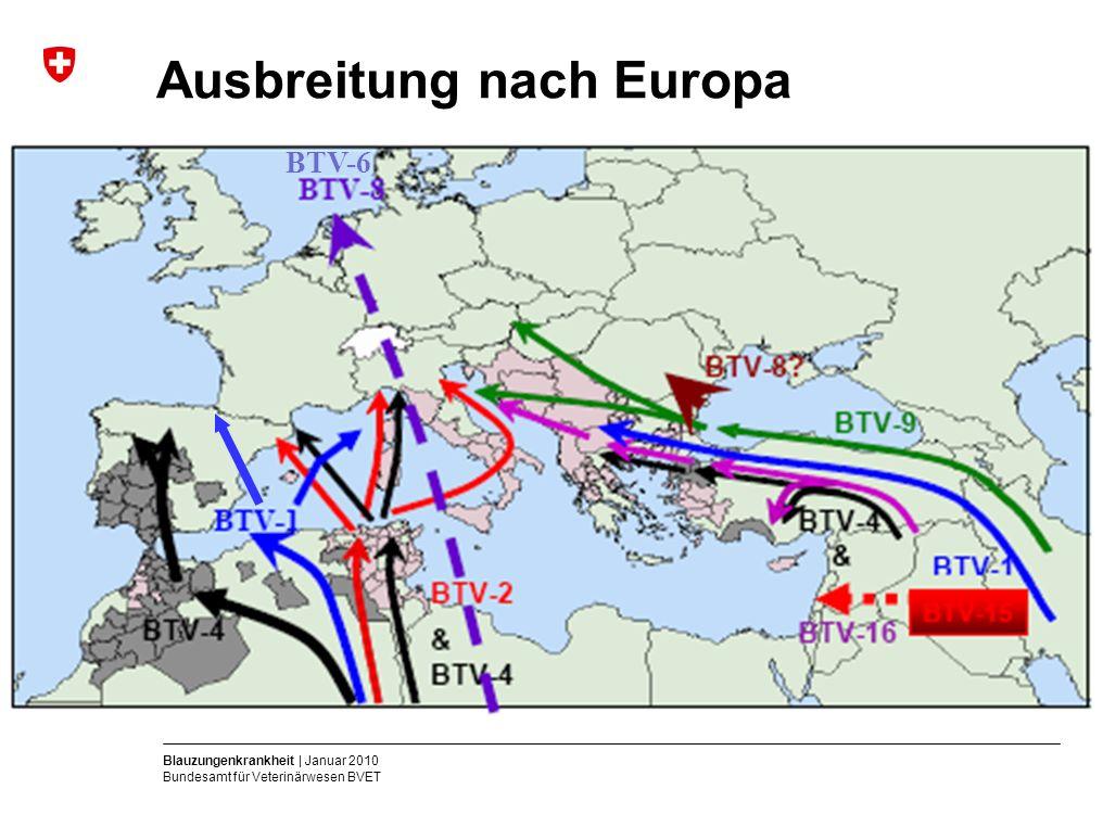 Blauzungenkrankheit | Januar 2010 Bundesamt für Veterinärwesen BVET Ausbreitung nach Europa BTV-6