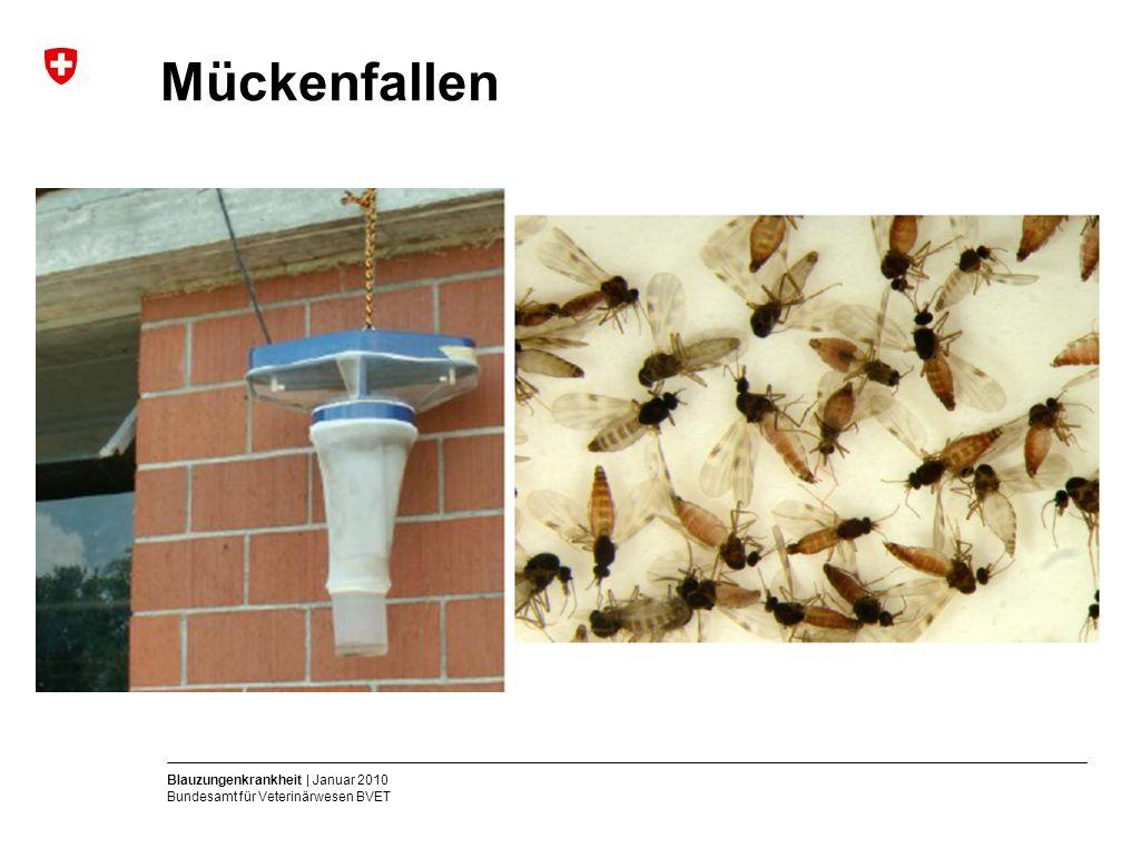 Blauzungenkrankheit | Januar 2010 Bundesamt für Veterinärwesen BVET Mückenfallen
