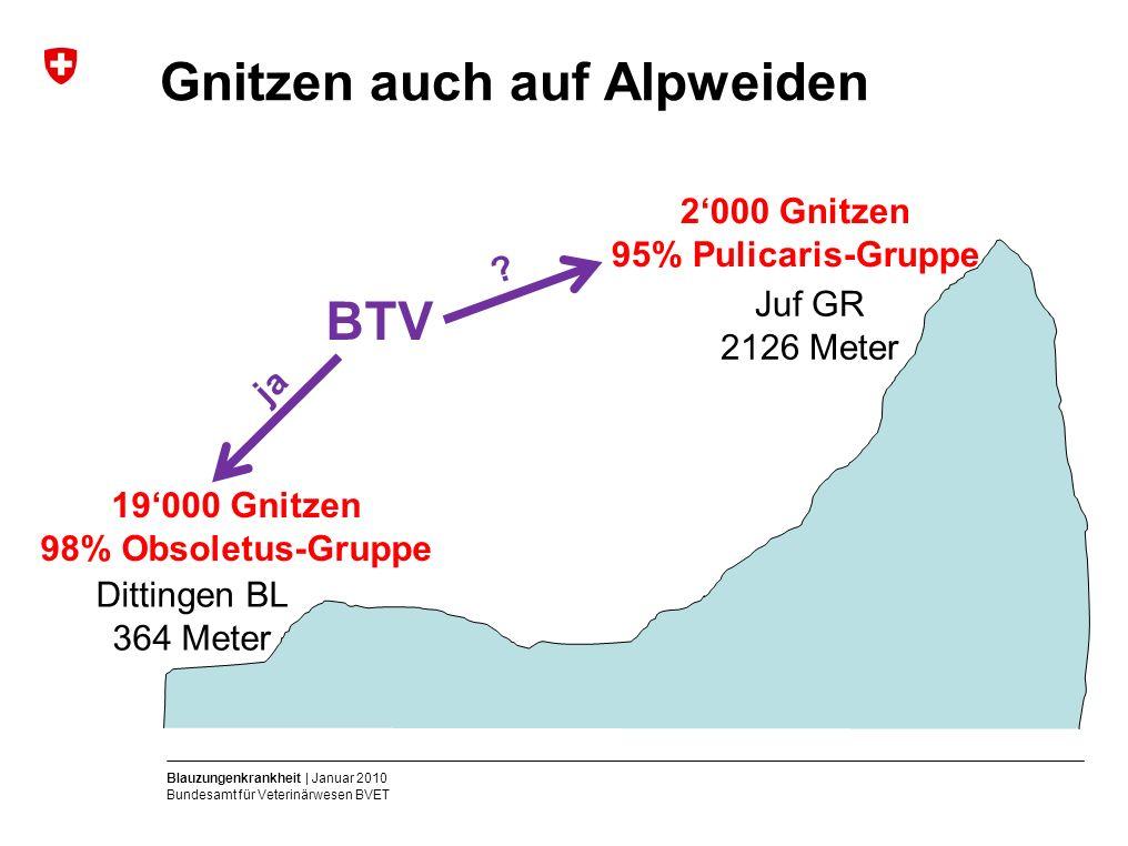 Blauzungenkrankheit | Januar 2010 Bundesamt für Veterinärwesen BVET Gnitzen auch auf Alpweiden Dittingen BL 364 Meter Juf GR 2126 Meter 19'000 Gnitzen 98% Obsoletus-Gruppe 2'000 Gnitzen 95% Pulicaris-Gruppe BTV ja