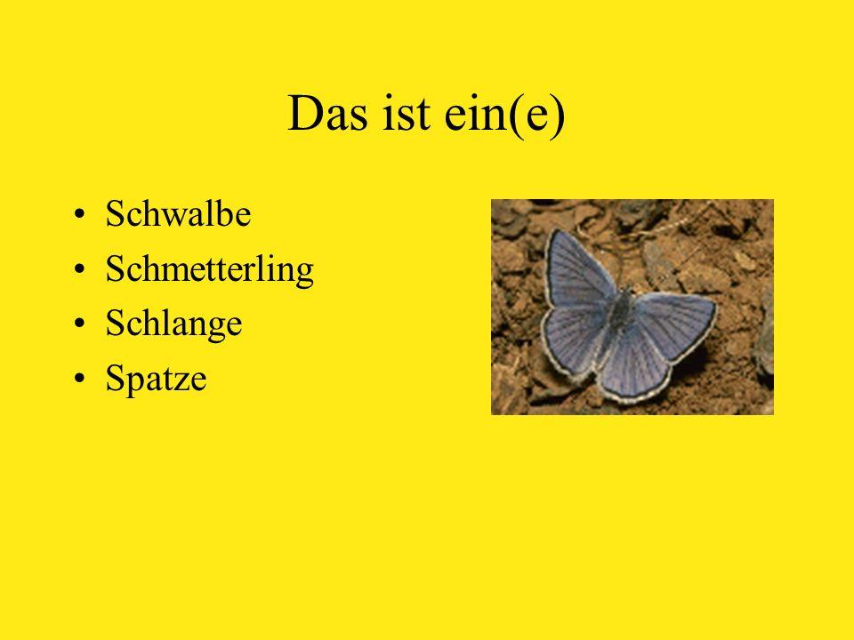 Das ist ein(e) Schwalbe Schmetterling Schlange Spatze