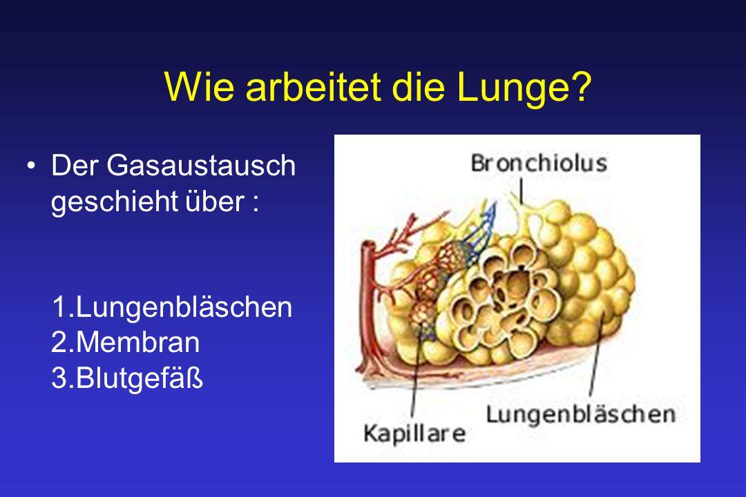 Wie arbeitet die Lunge Der Gasaustausch geschieht über : 1.Lungenbläschen 2.Membran 3.Blutgefäß