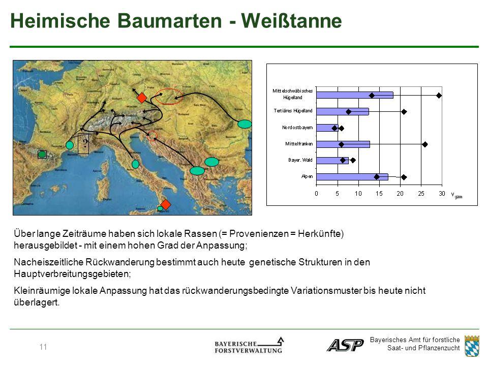 Bayerisches Amt für forstliche Saat- und Pflanzenzucht .