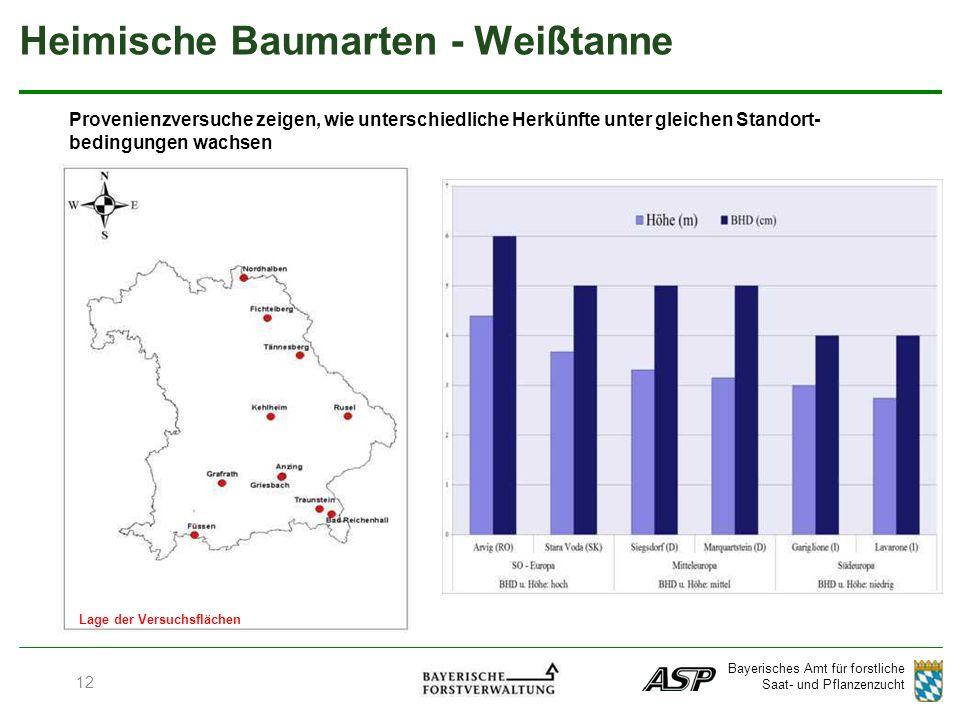Bayerisches Amt für forstliche Saat- und Pflanzenzucht Lage der Versuchsflächen Provenienzversuche zeigen, wie unterschiedliche Herkünfte unter gleichen Standort- bedingungen wachsen Heimische Baumarten - Weißtanne 12