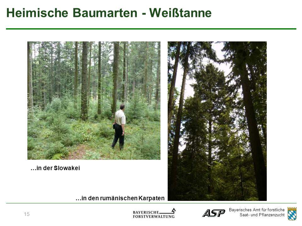 Bayerisches Amt für forstliche Saat- und Pflanzenzucht …in der Slowakei …in den rumänischen Karpaten Heimische Baumarten - Weißtanne 15