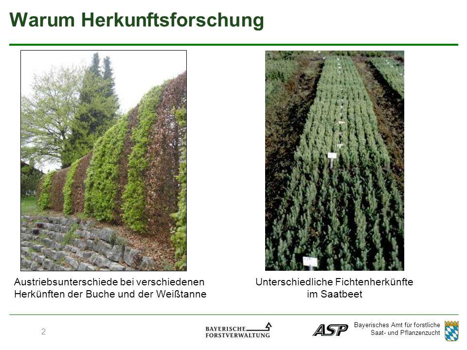 Bayerisches Amt für forstliche Saat- und Pflanzenzucht 2 Warum Herkunftsforschung Austriebsunterschiede bei verschiedenen Herkünften der Buche und der Weißtanne Unterschiedliche Fichtenherkünfte im Saatbeet