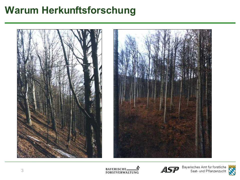 Bayerisches Amt für forstliche Saat- und Pflanzenzucht Regionen ohne Sommertrocknis Regionen mit höheren Niederschlägen Spätfrostgefährdete Lagen Herkunftsempfehlungen für Bayern Trockene Lagen 34 Douglasie (Pseudotsuga menziesii)