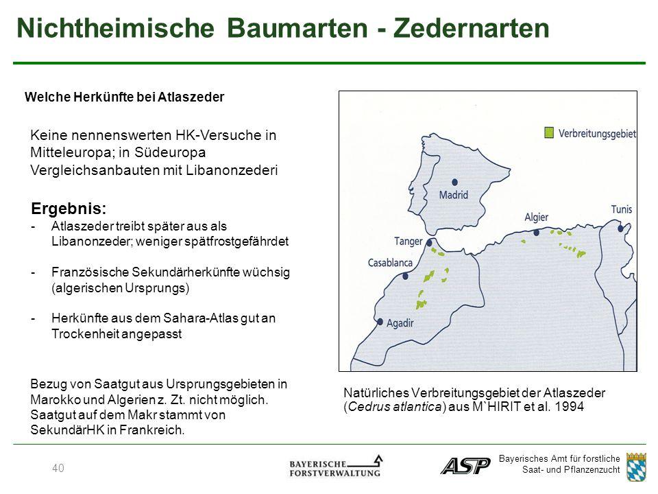 Bayerisches Amt für forstliche Saat- und Pflanzenzucht Welche Herkünfte bei Atlaszeder 40 Natürliches Verbreitungsgebiet der Atlaszeder (Cedrus atlantica) aus M`HIRIT et al.