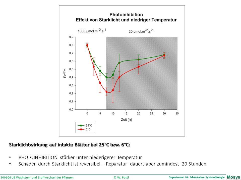 300606 UE Wachstum und Stoffwechsel der Pflanzen © W.