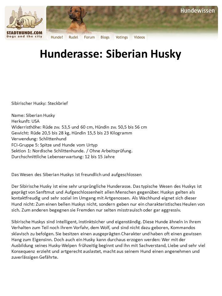 Hunderasse: Siberian Husky Sibirischer Husky: Steckbrief Name: Siberian Husky Herkunft: USA Widerristhöhe: Rüde zw.