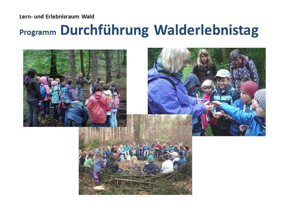 Lern- und Erlebnisraum Wald Programm Durchführung Walderlebnistag