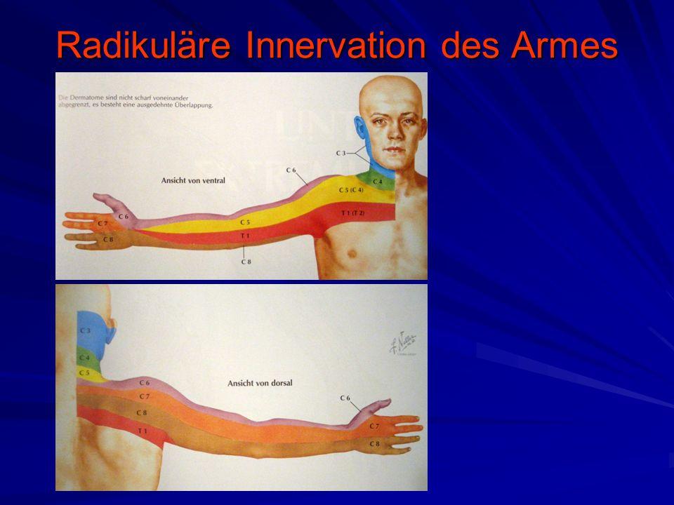Radikuläre Innervation des Armes