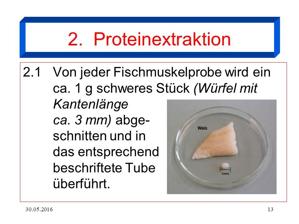 30.05.201613 2. Proteinextraktion 2.1Von jeder Fischmuskelprobe wird ein ca.