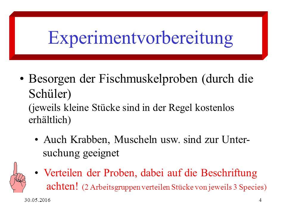 30.05.20164 Experimentvorbereitung Besorgen der Fischmuskelproben (durch die Schüler) (jeweils kleine Stücke sind in der Regel kostenlos erhältlich) Auch Krabben, Muscheln usw.
