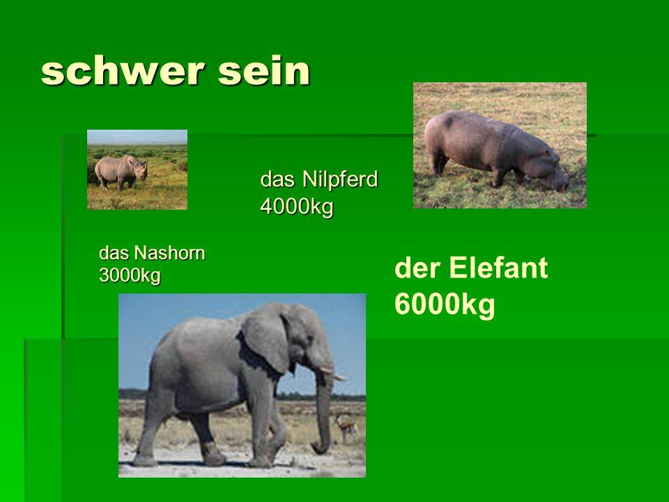 schwer sein das Nashorn 3000kg der Elefant 6000kg das Nilpferd 4000kg