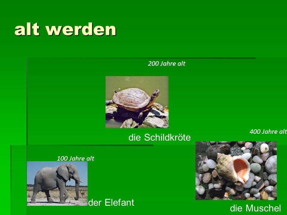 alt werden der Elefant die Schildkröte die Muschel 100 Jahre alt 200 Jahre alt 400 Jahre alt