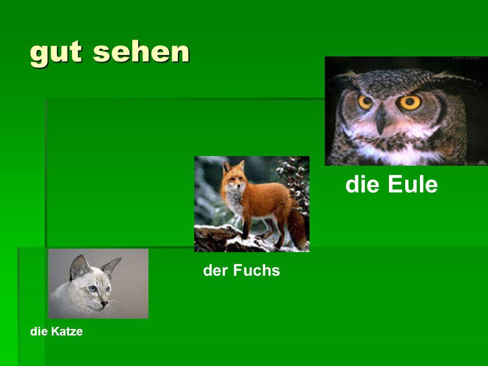 gut sehen die Katze der Fuchs die Eule