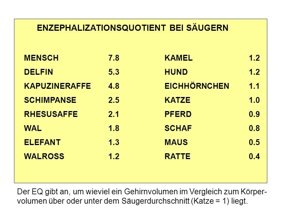 ENZEPHALIZATIONSQUOTIENT BEI SÄUGERN MENSCH7.8KAMEL1.2 DELFIN5.3HUND1.2 KAPUZINERAFFE4.8EICHHÖRNCHEN1.1 SCHIMPANSE2.5KATZE1.0 RHESUSAFFE2.1PFERD0.9 WAL 1.8 SCHAF0.8 ELEFANT 1.3MAUS0.5 WALROSS 1.2RATTE0.4 Der EQ gibt an, um wieviel ein Gehirnvolumen im Vergleich zum Körper- volumen über oder unter dem Säugerdurchschnitt (Katze = 1) liegt.