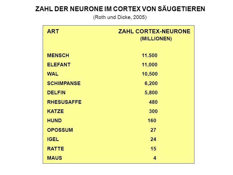 ZAHL DER NEURONE IM CORTEX VON SÄUGETIEREN (Roth und Dicke, 2005) ART ZAHL CORTEX-NEURONE (MILLIONEN) MENSCH 11.500 ELEFANT 11,000 WAL 10,500 SCHIMPANSE 6,200 DELFIN 5,800 RHESUSAFFE 480 KATZE 300 HUND 160 OPOSSUM 27 IGEL 24 RATTE 15 MAUS 4