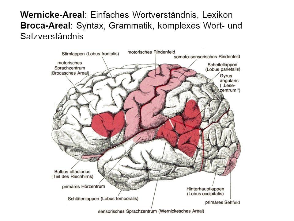 Wernicke-Areal: Einfaches Wortverständnis, Lexikon Broca-Areal: Syntax, Grammatik, komplexes Wort- und Satzverständnis