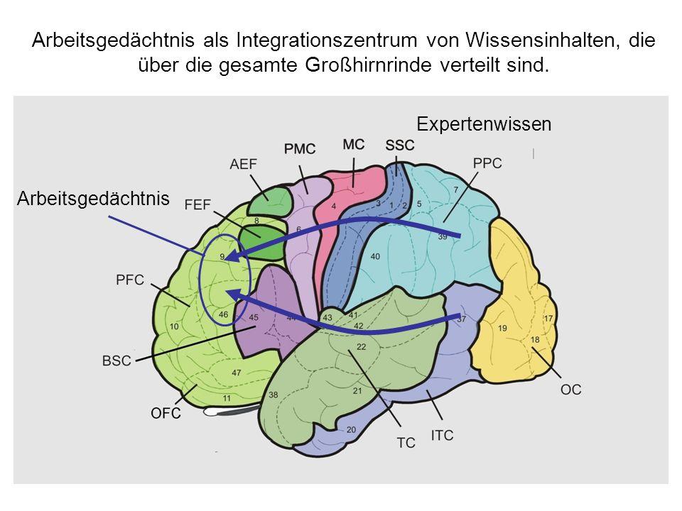 Arbeitsgedächtnis als Integrationszentrum von Wissensinhalten, die über die gesamte Großhirnrinde verteilt sind.
