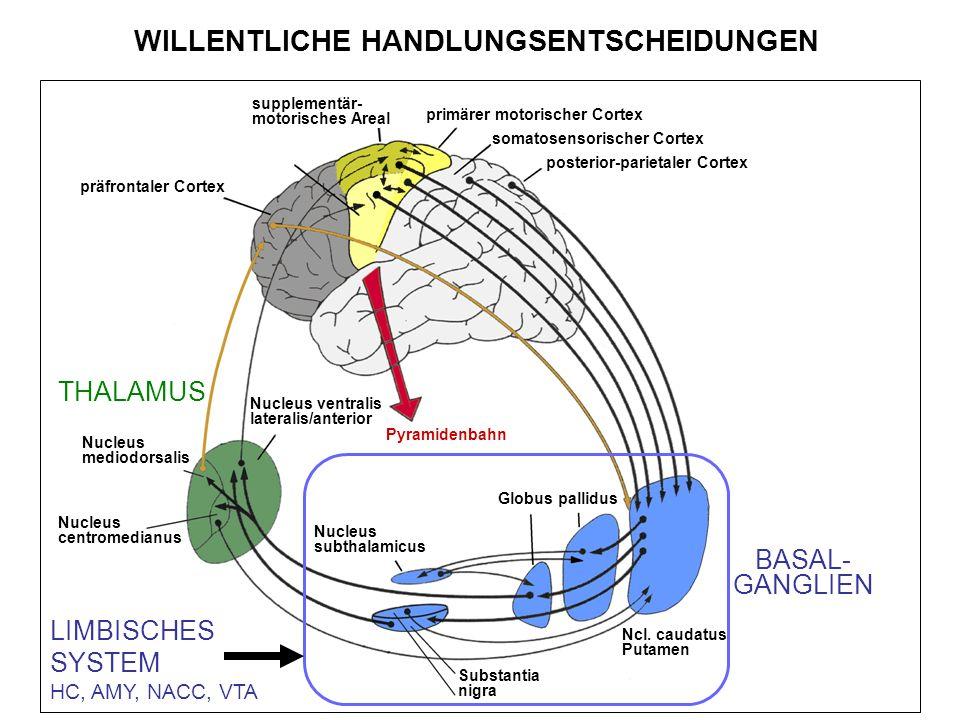 supplementär- motorisches Areal primärer motorischer Cortex somatosensorischer Cortex posterior-parietaler Cortex Globus pallidus Nucleus subthalamicus Substantia nigra Ncl.