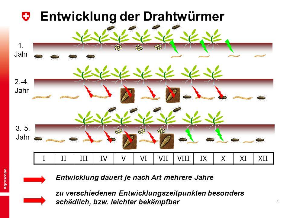 4 IIIIIIIVVVIVIIVIIIIXXXIXII 1. Jahr 2.-4. Jahr 3.-5. Jahr Entwicklung der Drahtwürmer Entwicklung dauert je nach Art mehrere Jahre zu verschiedenen E