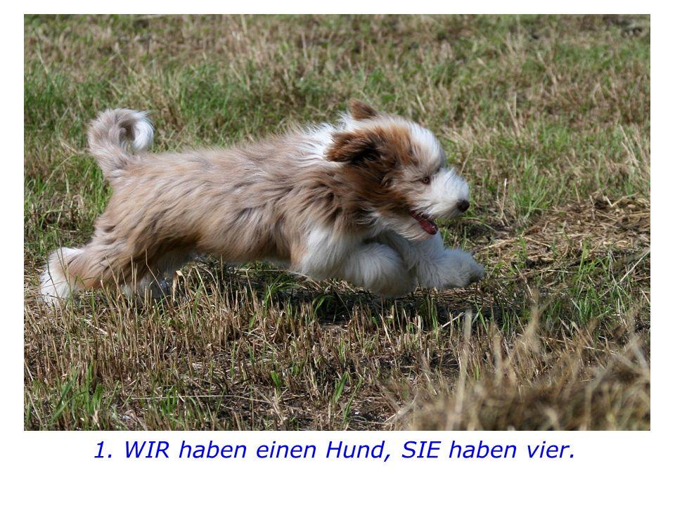 """Hast du etwas daraus gelernt?"""" fragt der Vater. Darauf der Sohn: © Elke Kretschmann  www.Pure-Lust-auf-Leben.de"""