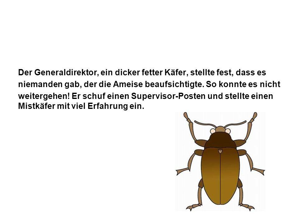 Der Generaldirektor, ein dicker fetter Käfer, stellte fest, dass es niemanden gab, der die Ameise beaufsichtigte. So konnte es nicht weitergehen! Er s