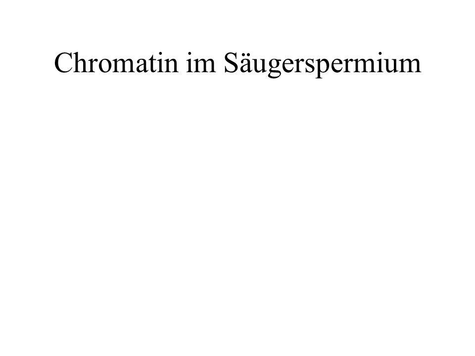 Übergang Histone - Protamine beim Säuger nicht direkt sondern zunächst sogenannte Transitionsproteine = TP SCHEMA an die Tafel