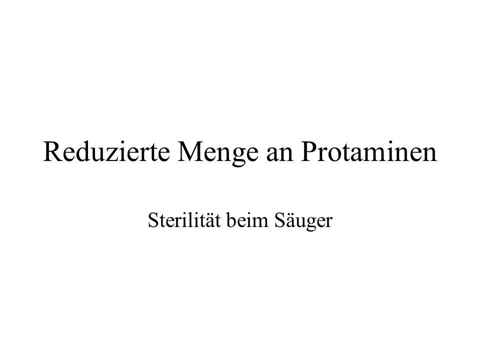 Fig.s: Steger, Klaus (1999) Transcriptional and translational regulation of gene expression in haploid spermatids.
