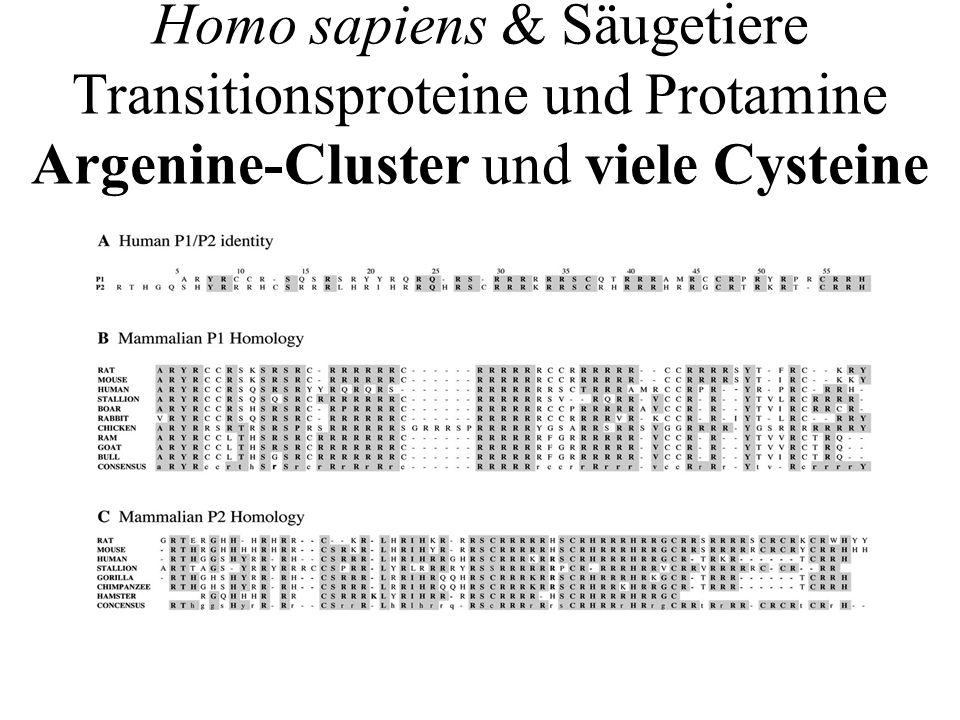 Kreuzungen (vgl Mendelregeln) Man erhält heterozygote K.Os, für TP k.o.