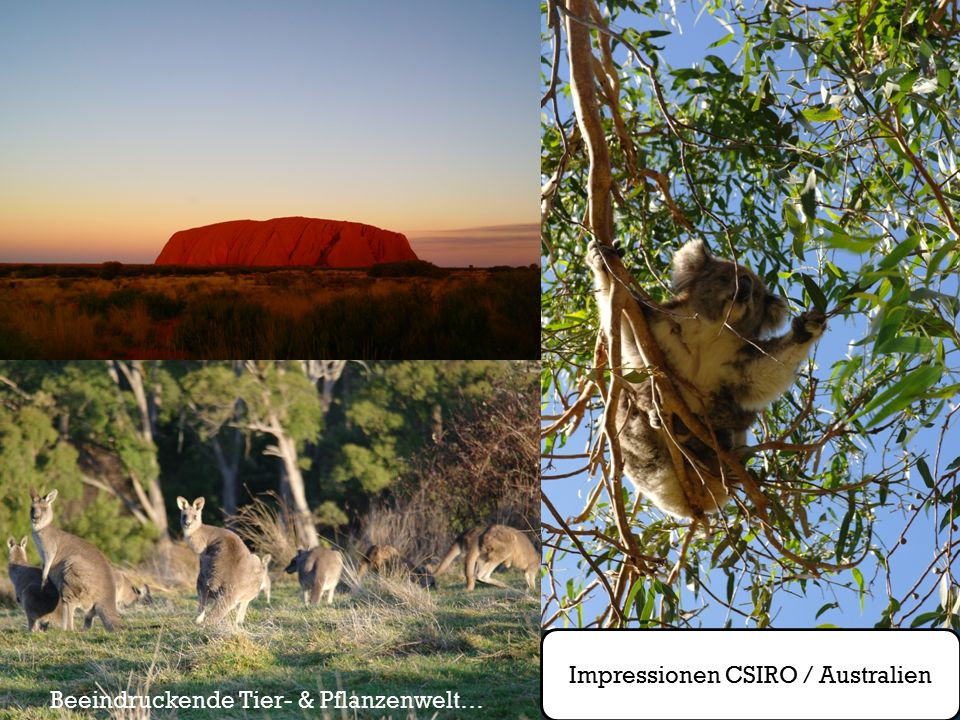 Impressionen CSIRO / Australien Beeindruckende Tier- & Pflanzenwelt…