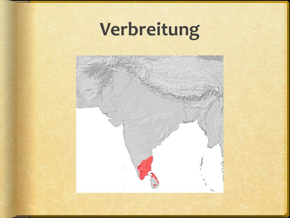Schrift und Aussprache  Tamilische Schrift ist Zwischenform aus Alphabet und Silben  Grundelement ist Konsonantenzeichen, das mit Vokal verbunden ist.