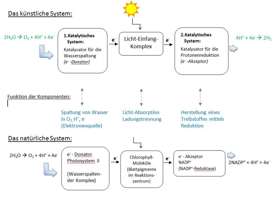 Der Vergleich: Das natürliche System (Nr.4): Forschung aktuell Das künstliche System: Das natürliche System: