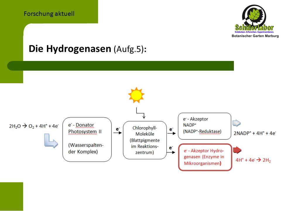Die Hydrogenasen (Aufg.5): Forschung aktuell