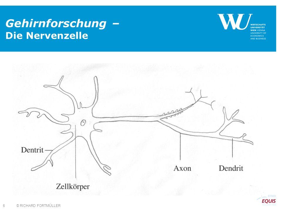 © RICHARD FORTMÜLLER 6 Gehirnforschung – Die Nervenzelle