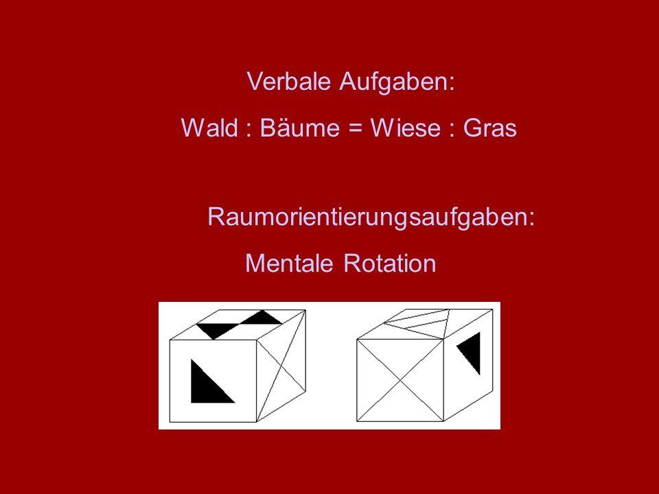 Raumorientierungsaufgaben: Mentale Rotation Verbale Aufgaben: Wald : Bäume = Wiese : Gras