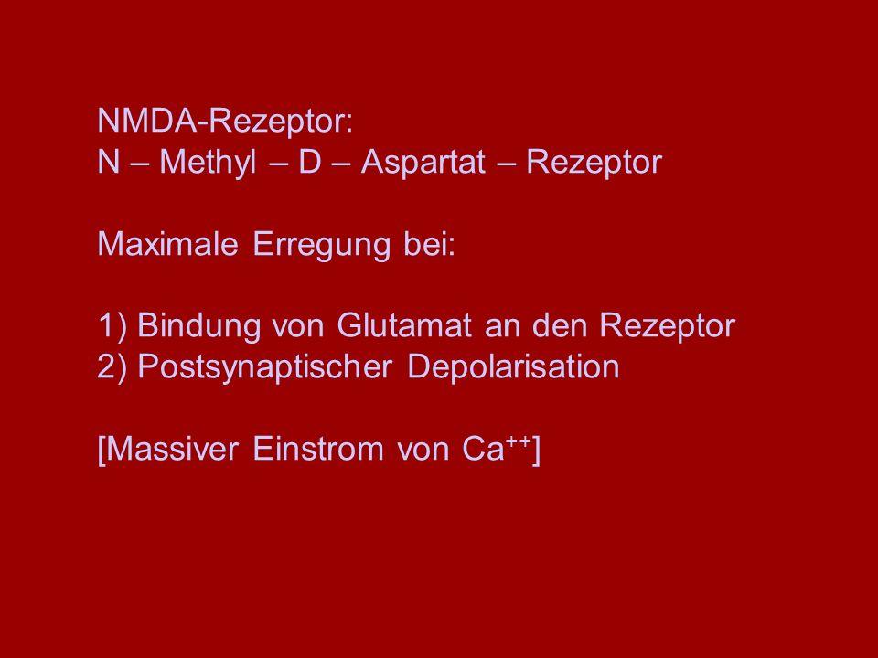 NMDA-Rezeptor: N – Methyl – D – Aspartat – Rezeptor Maximale Erregung bei: 1) Bindung von Glutamat an den Rezeptor 2) Postsynaptischer Depolarisation