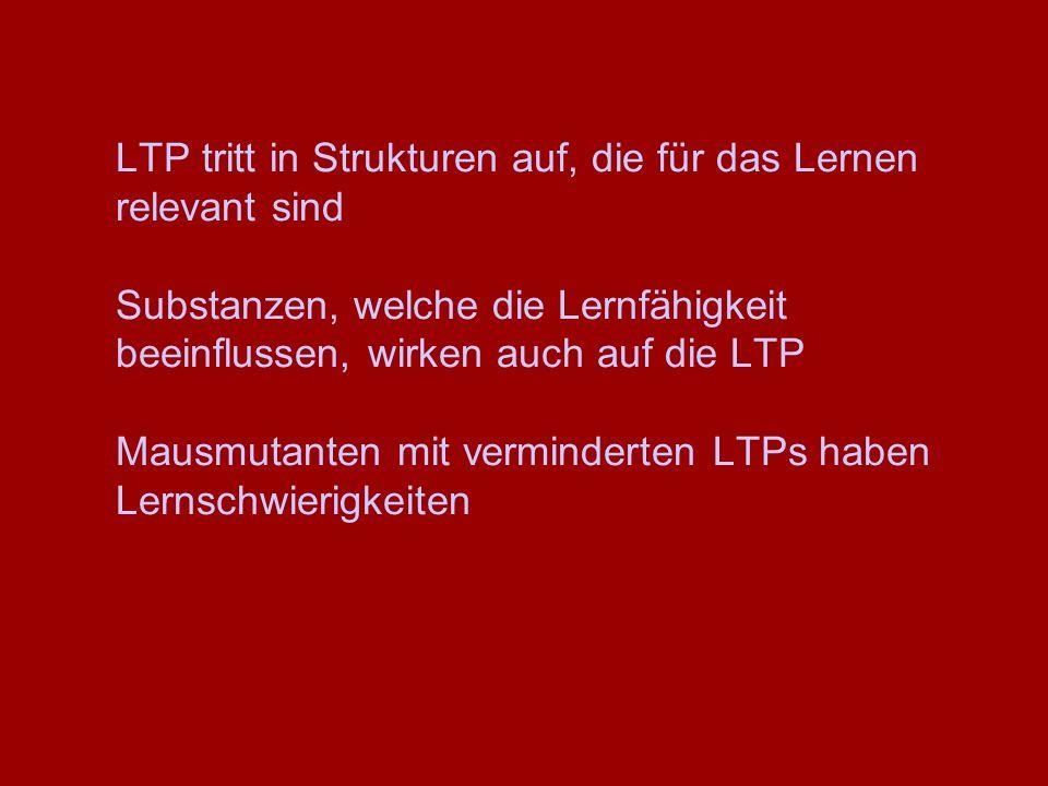 LTP tritt in Strukturen auf, die für das Lernen relevant sind Substanzen, welche die Lernfähigkeit beeinflussen, wirken auch auf die LTP Mausmutanten