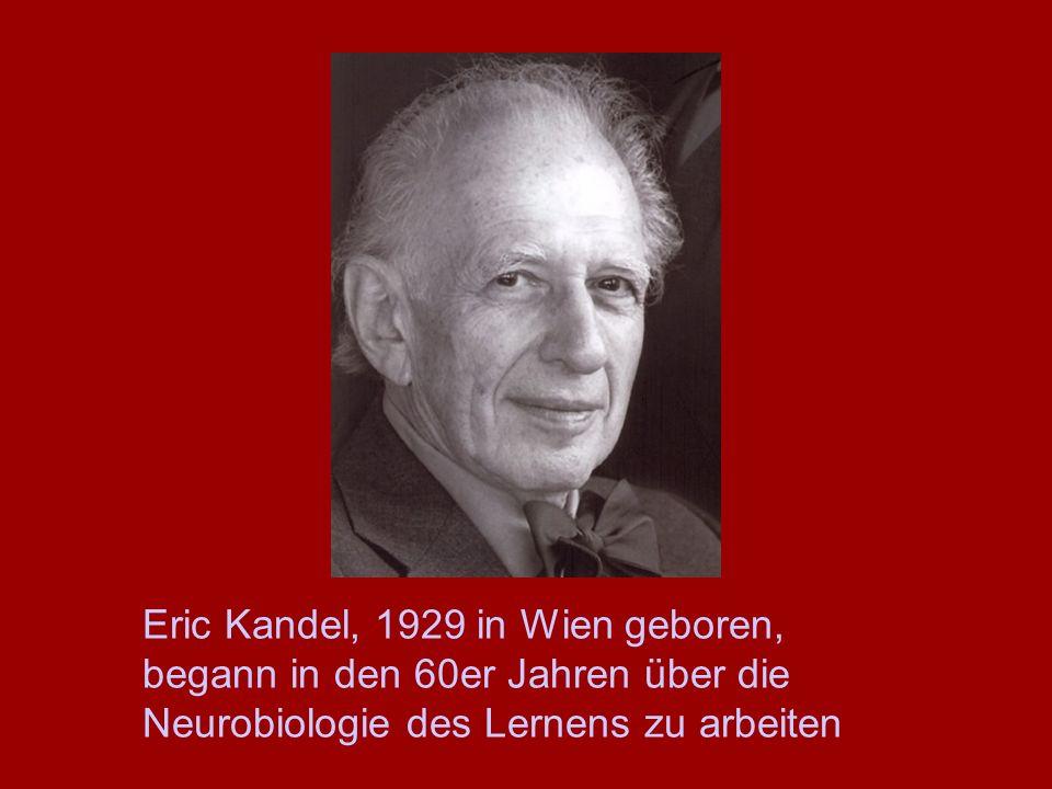 Eric Kandel, 1929 in Wien geboren, begann in den 60er Jahren über die Neurobiologie des Lernens zu arbeiten