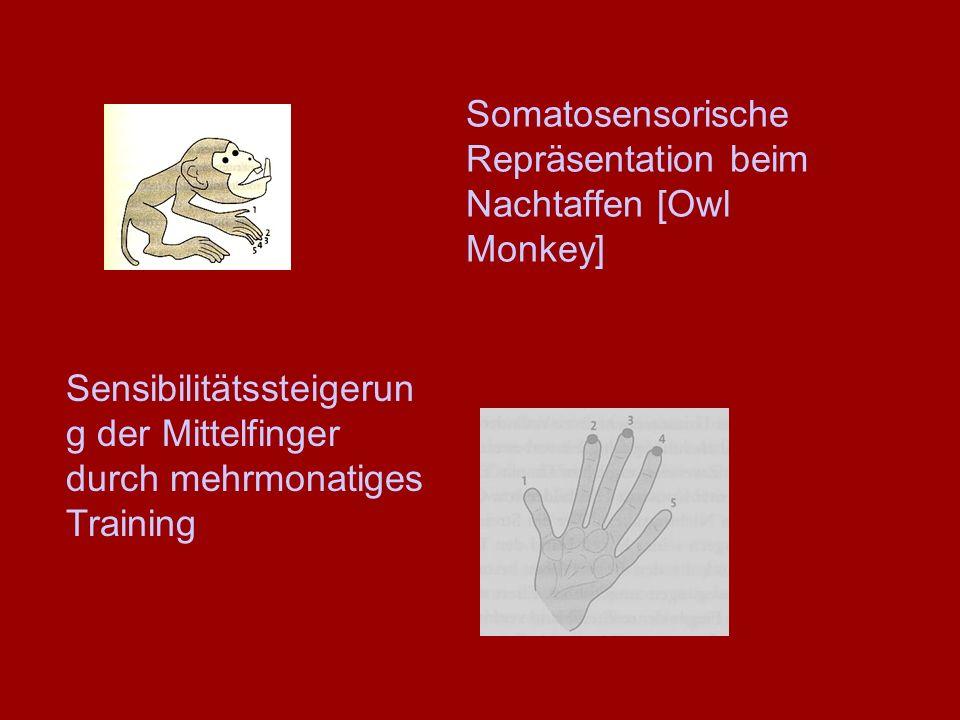 Sensibilitätssteigerun g der Mittelfinger durch mehrmonatiges Training Somatosensorische Repräsentation beim Nachtaffen [Owl Monkey]
